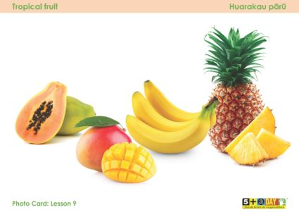 Lesson 9 Photo Card Tropical Hr